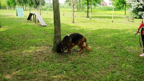 Aree cani, diciassette nuovi spazi da dedicare alla sgambatura – gonews