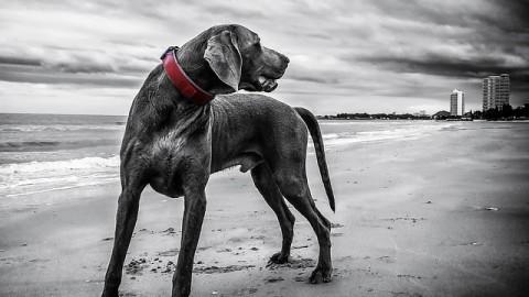 Cosa rischio se abbandono il cane? – La Legge per Tutti