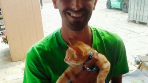 Ginger, il gatto del villaggio, «emigrato» a Torino – La Sicilia