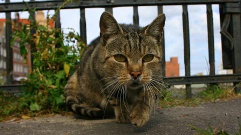 Follonica (GR), raid notturno nel gattile: vogliamo giustizia