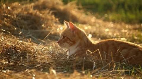 Come i gatti conquistarono il mondo (e qualche nave vichinga) – Le Scienze