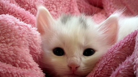 Expofelina: appuntamento nel weekend per ammirare i gatti più belli … – MBnews