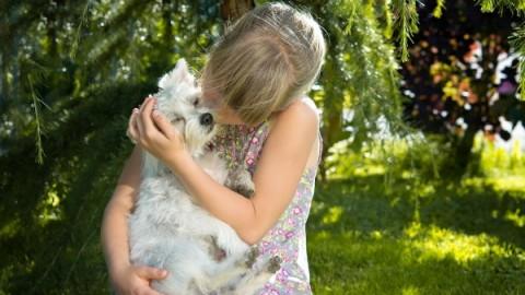 Attenti al cane: spesso i genitori sottostimano i rischi per i bimbi piccoli – nostrofiglio.it