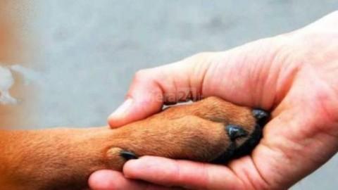 La Lega del Cane di Ventimiglia chiede sovvenzioni – Riviera24.it