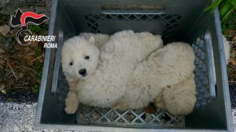 Quattro cuccioli di cane gettati in un dirupo profondo quindici metri … – RomaToday