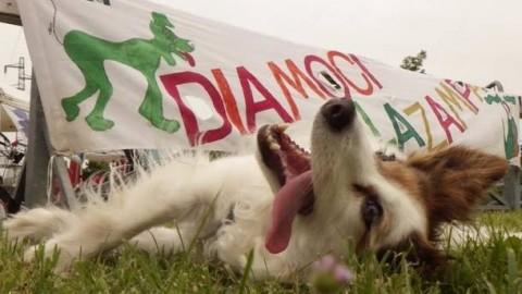Al parco Forlanini raduno dei cani allegri, vince il più simpatico – Varese News