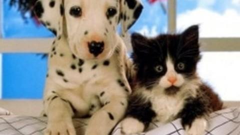 1^ Festa degli Adottanti di cani e gatti con Enpa a Parco Fornaci – VicenzaToday