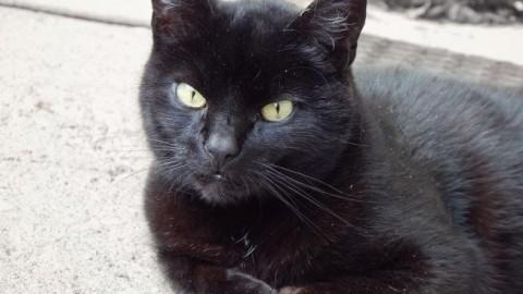 Non è vero che i gatti neri siano presagi di sventure – Cronache Maceratesi (Registrazione)