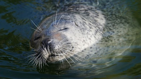 Hawaii: le feci di gatto minacciano le foche – GreenStyle