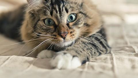 Gatti: NO al collare con campanellino – Petpassion.tv