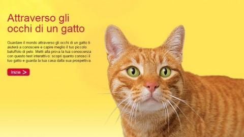 I gatti con gli occhi di colori diversi – Petpassion.tv