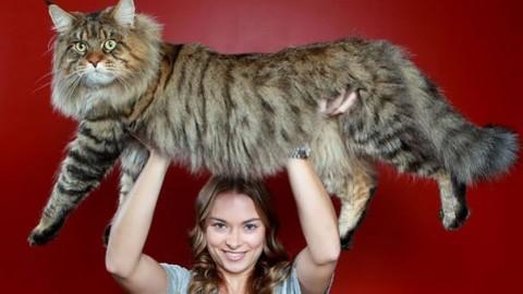 Firenze: «I gatti più belli del mondo» a Calenzano. Esposizione … – Firenze Post