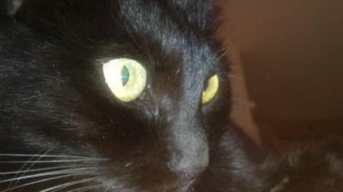 Gatto nero: sfatiamo inutili superstizioni – Amando.it