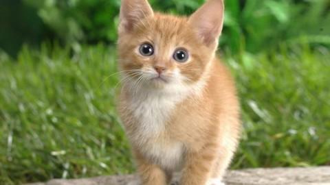 Il gatto, i pericoli ei consigli di Monza a 4 zampe – Nuova Brianza