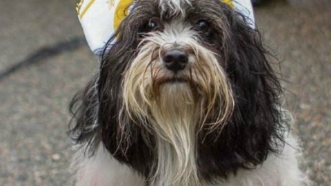 Tompkins Square Dog parade, la grande tristezza: come ti vesto il … – Il Fatto Quotidiano