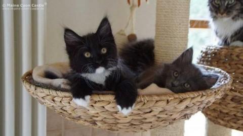 Avere un gatto in casa, ecco cosa si rischia – Blasting News