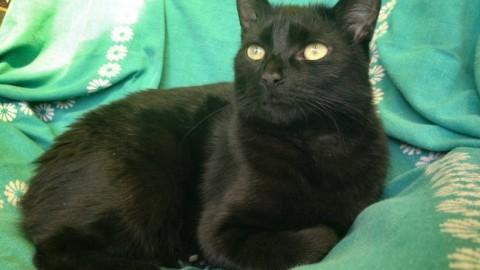 Halloween, l'allarme dell'Enpa: attenti alla sorte del vostro gatto nero – Qui Brianza (Comunicati Stampa) (Registrazione) (Blog)