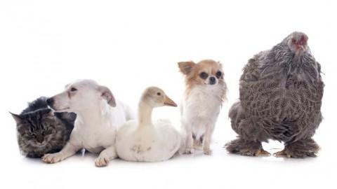 Animali domestici e infezioni, i consigli del SIMIT per non correre rischi – Benessereblog.it (Blog)