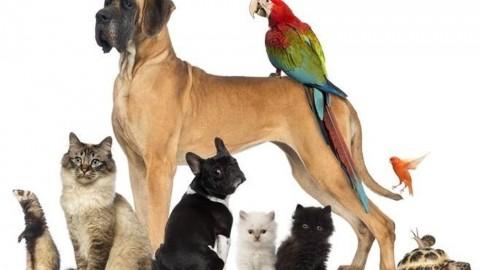 """""""Ioconfido"""": il rivoluzionario portale gratuito dedicato agli animali da … – Velvet Pets Italia (Blog)"""