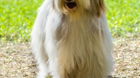 Quanto costano i cani di razza? Ecco la verità! – 105.net