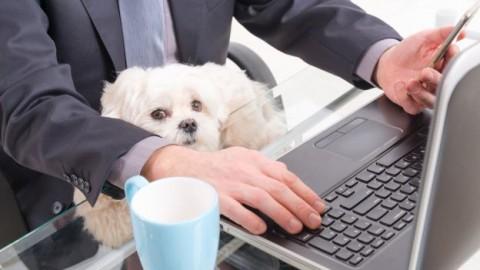 Animali e cuccioli – DeAbyDay.it (Blog)