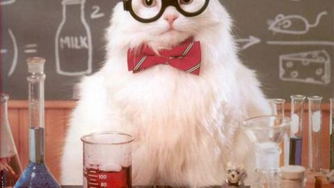 """La scienza dei gatti: ecco alcuni dei più strani """"esperimenti felini"""" – Diregiovani"""