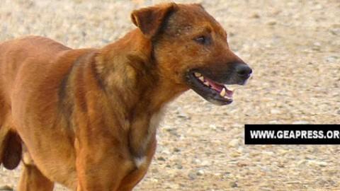 Caltanissetta – Cane torturato e poi bruciato. Il WWF si appella al … – GeaPress