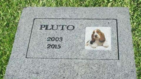 Nuova legge sugli animali domestici: vengono sepolti vicino ai … – Giornale Notizie (Blog)