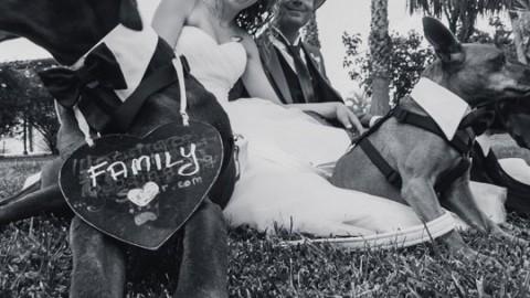 Nozze: all'altare insieme al proprio cane – IO donna