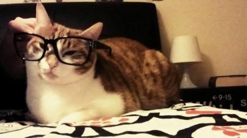 """Lo studio: """"Avere un gatto aumenta il rischio di disturbi mentali"""" – Leggo.it"""