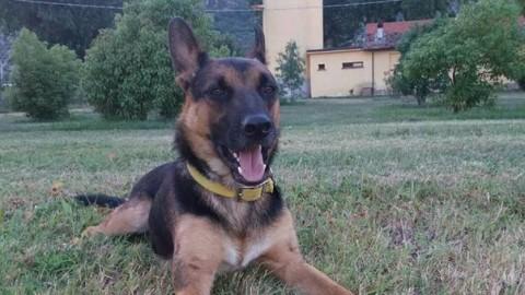 Ziggy, il cane di sei mesi muore per overdose di eroina a piazza … – Leggo.it