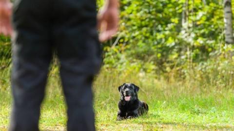 """Attenzione e cura dei """"pets"""": dal cane ai rettili, le infezioni causate … – Meteo Web"""