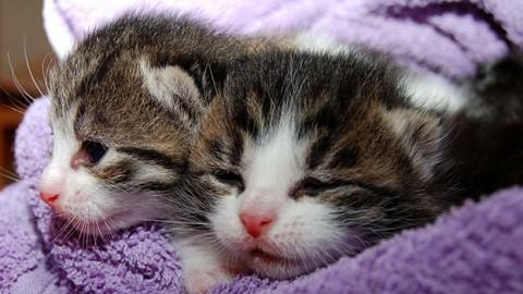 """Diritti degli animali: """"Cani e gatti non dovrebbero stare con noi"""" – Vegolosi.it"""