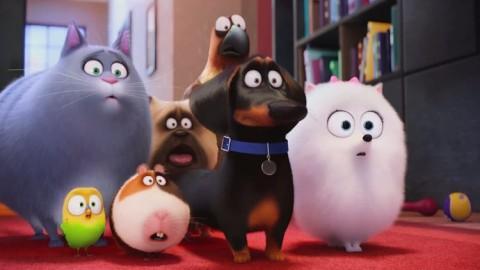 """Concorso fotografico per l'uscita al cinema di """"Pets"""" – Versiliatoday.it"""