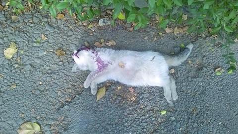 CHIVASSO. Un killer dei gatti in via Favorita? – Giornale La Voce