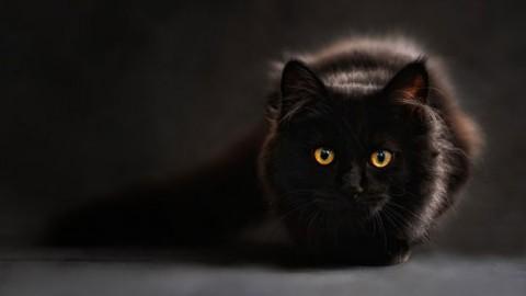 Sei libri sul gatto nero – GraphoMania (Blog)