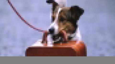 Viaggiare con il cane: 4 consigli per viaggiare in treno – Buzznews portale di notizie