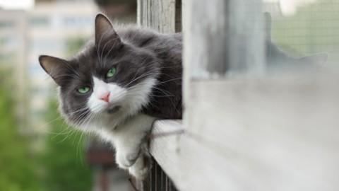 Sicurezza gatto: come mettere in sicurezza balconi, finestre e terrazzi – Petpassion.tv