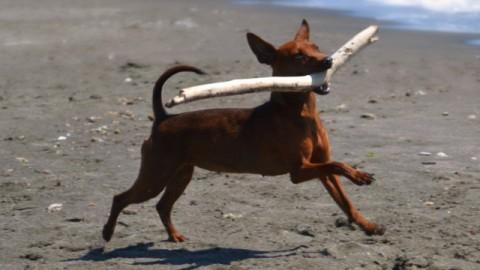 Bastoni e pezzetti di legno: un pericolo per i cani – Petpassion.tv