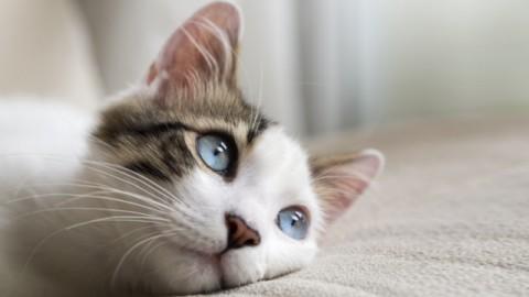 Necessità del gatto anziano – Petpassion.tv