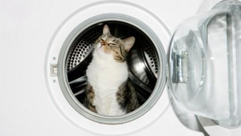 Anche i gatti si possono addestrare (in 10 mosse) – Vanity Fair.it