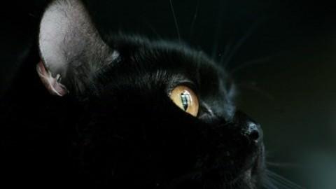 Giornata del gatto nero. Tra curiosità e superstizioni – Vanity Fair.it