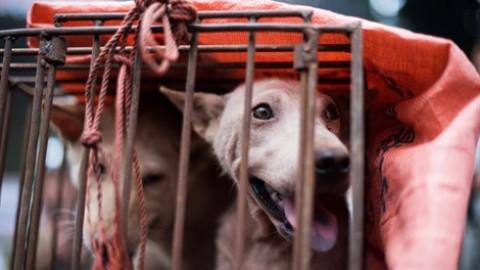 Sono 17mila i cani rapiti ogni anno soltanto in Italia – Vanity Fair.it