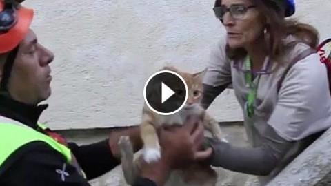 """Terremoto, dopo le persone """"sfollati"""" anche gli animali. Il salvataggio … – Il Fatto Quotidiano"""