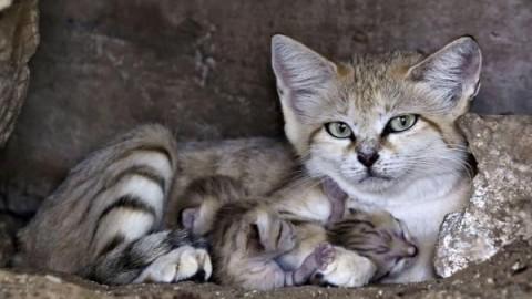 Il gatto: sua maestà il felino re dell'indifferenza – Blasting News
