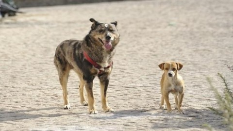 Il calvario dei terremotati che possiedono un cane – Blasting News
