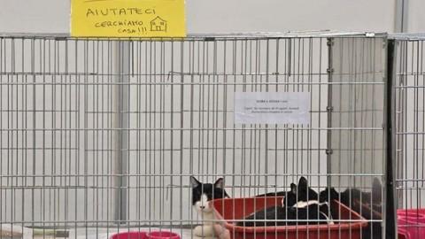 Al Supercat show, Sisma e Scossa, gatti terremotati, cercano ancora … – redazione (Comunicati Stampa)