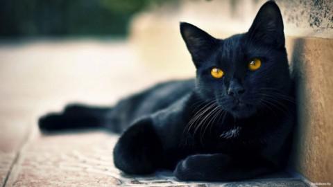 XIII Gatto Nero Day. Giornata contro tutte le superstizioni – redazione (Comunicati Stampa)