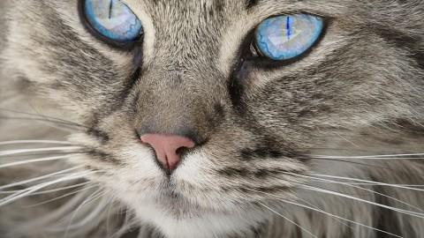 Perché il gatto mi fa l'occhiolino? – Bigodino.it