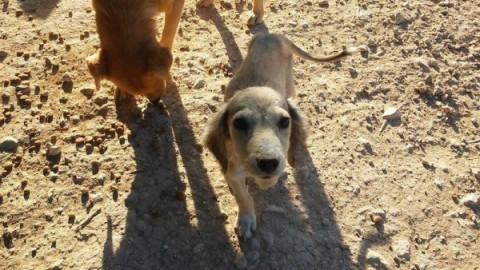 Takis, l'amante degli animali, sta salvando 160 cani a Creta! – focusjunior.it